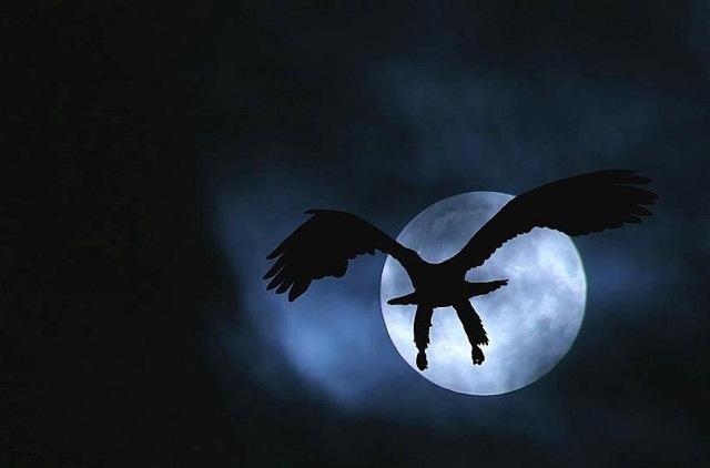 El águila dorada