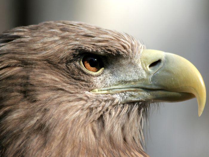 Renovarse o morir como las águilas