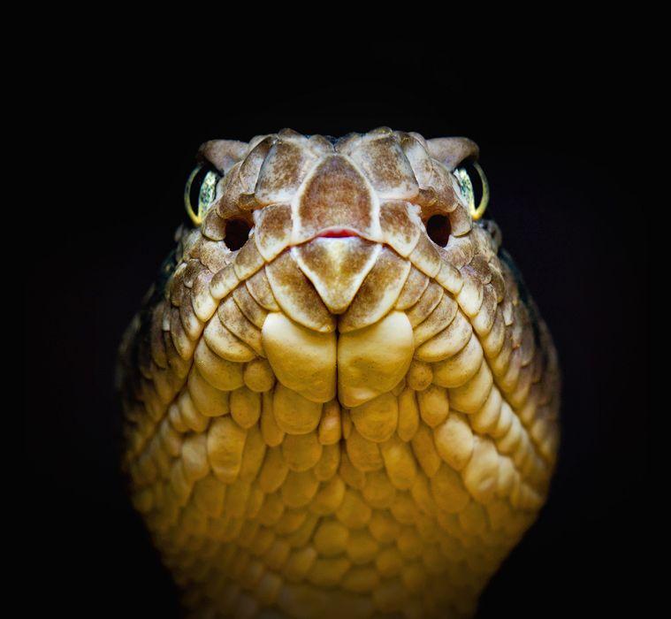 La serpiente y la luciérnaga