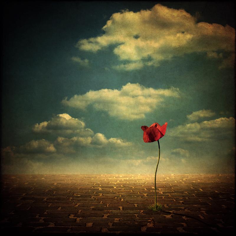 http://www.bonsaisgigantes.net/zen/wp-content/uploads/2010/08/lonely-beauty-by-schnette.jpg