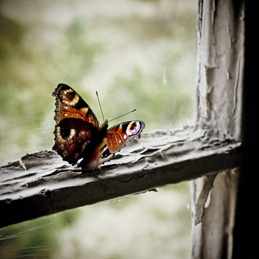 Paisaje desde la ventana
