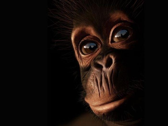 ¿Sabes cómo cazan al mono en áfrica?