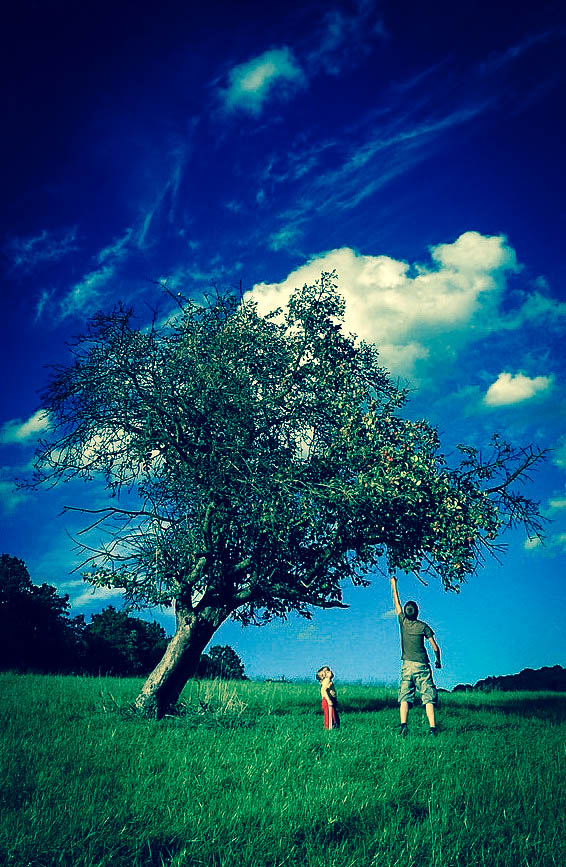 El árbol cargado de fruta