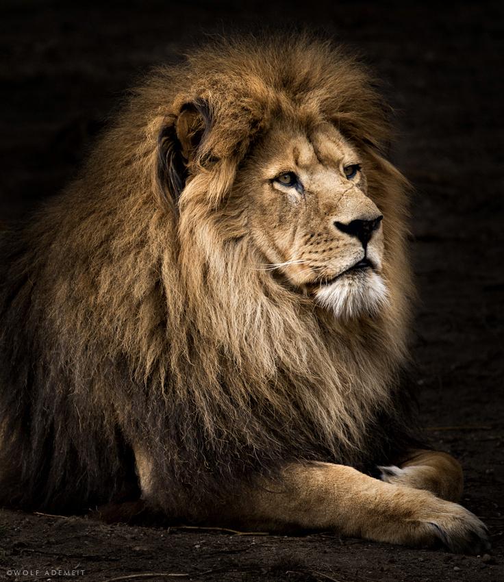 La mujer y el león