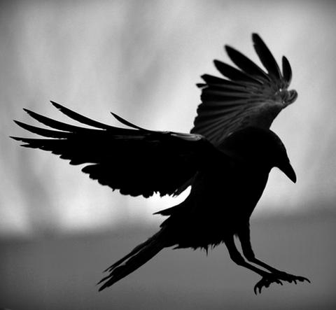 El cielo y el cuervo