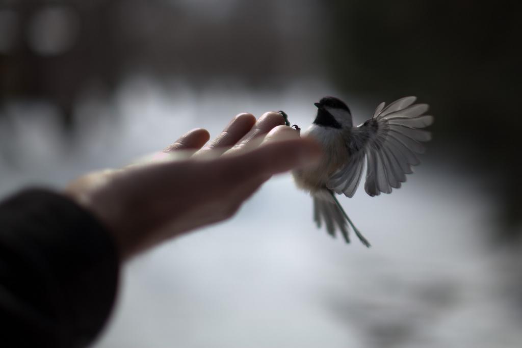 Los amantes de los pájaros