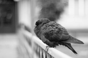 Photograph I'm sad... by Yuri Serpinsky on 500px