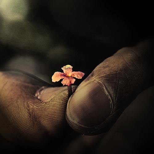 dedos-mugrientos-florecilla