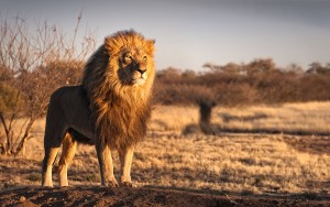 leon-amanecer-by-Andrew-Deer