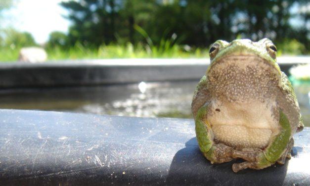 La rana que no sabía que estaba hervida